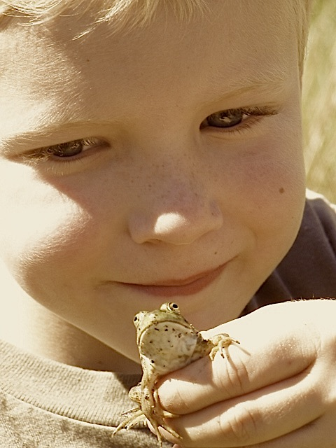 Picking up frogs is his passion.  Why, and what is he learning from doing that?